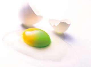 イメージ写真 タマゴの黄身が黄色と緑色